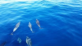 Dolphins Joining us for a Burial at Sea Service great burial at sea pictures